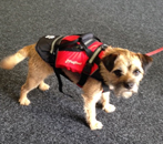 Pet buoyancy aids for sale in uk